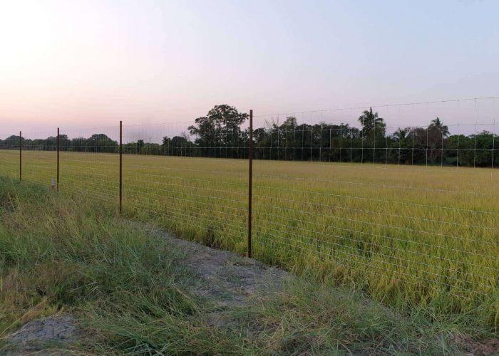ตัวอย่างที่ 4 รั้วล้อมสวน